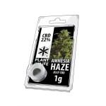 Plant Of Life CBD Jelly 22% Amnesia Haze
