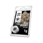 Plant Of Life CBD Jelly 22% Blueberry