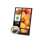 Plant Of Life CBD 3.8% Mango