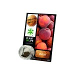 Plant Of Life CBD 3.8% Peach