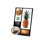 Plant Of Life CBD 3.8% Pineapple