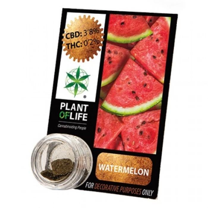 Plant Of Life CBD 3.8% Watermelon
