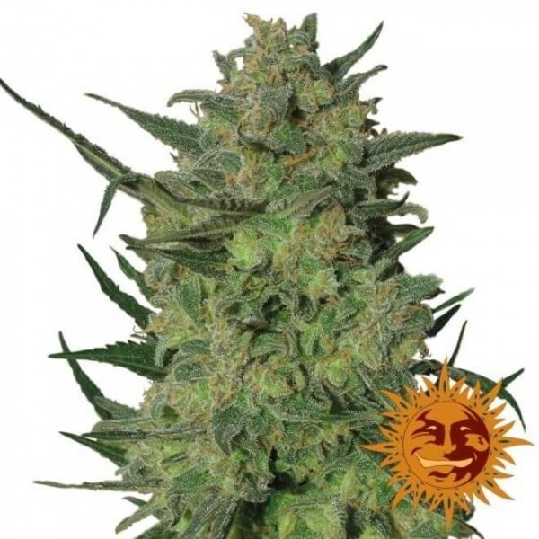 Barneys Farm LSD FEM